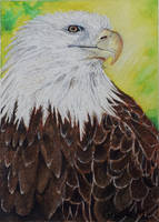 Eagle by Giselle-M