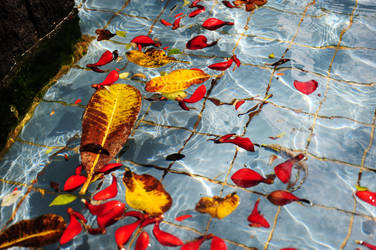 floating leaves by luckysevenstars