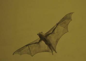 Pteropus scapulatus by GlupayaSova
