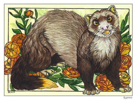 Ferret by Plaguedog