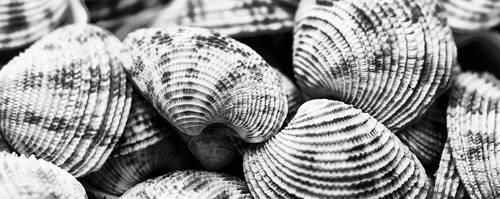 denizkabuklari by fotouur