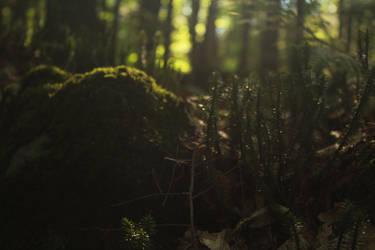 Forest Haze by iantrnr