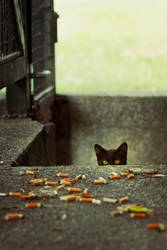 Undergorund cat by o0she0o