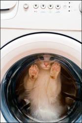 Cat laundry by amazing-cat