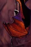 Bat by trinemusen1
