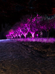 Glow Trees by TheOneandOnlyPLAP