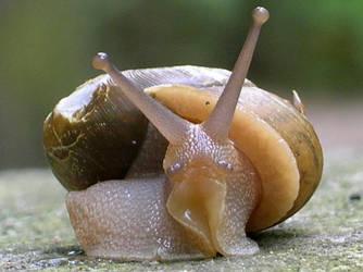 the Snail by UtharWynn