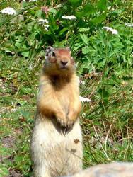 A Furry Fellow by UtharWynn