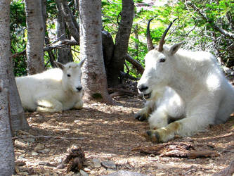 goatse.deviantart.com by UtharWynn