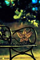 Bench by aspenx