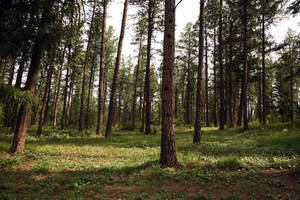 ((STOCK)) :: Forest Two by evanaeru