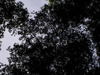 shade tree by twisterwolf