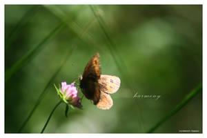 harmony by fir3hand
