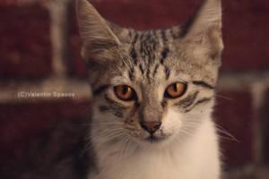 kitty by fir3hand