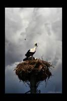 stork by fir3hand