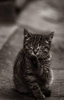kitty cat 2 by fir3hand