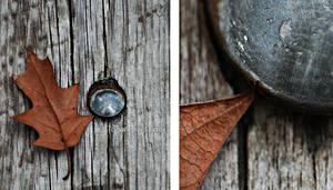 autumn  leaf by fir3hand