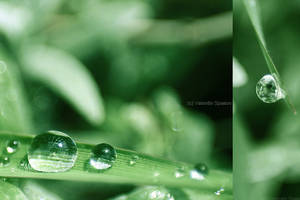 droplets by fir3hand