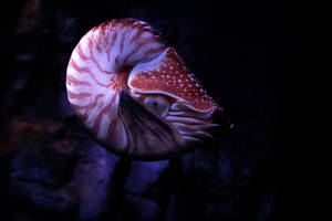 Nautilus by KuhlSmokie