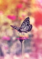 Butterfly Kiss by crimsonray