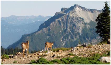Washington wildlife by daydrop