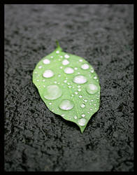 Leaf with Water Drops 2 by daydrop