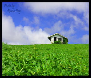 'Lil Shack In The Grass by daydrop