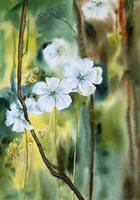 Some strange flowers by stokrotas