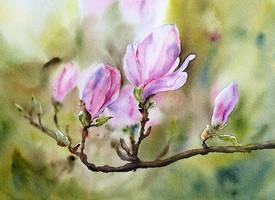 Wiosenne magnolie by stokrotas