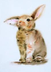 Sad rabbit / Adorable Bunny by stokrotas