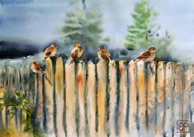 Five birds by stokrotas
