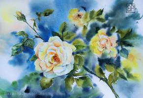 Energetic roses by stokrotas