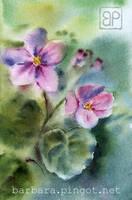 Violet I by stokrotas