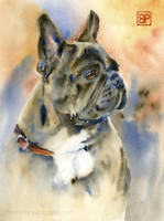 French Bulldog by stokrotas