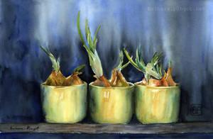 Taki szczypiorek/Just spring onion by stokrotas