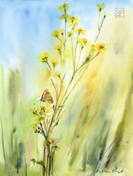 Rzepinska laczka/Meadow in rzepin by stokrotas