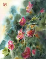 Radosne roze/Joyful roses by stokrotas