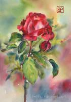 Godzina pasowej rozy / Crimson rose by stokrotas