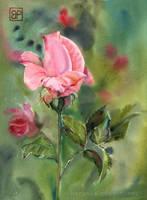 Na rozano/ For rose by stokrotas