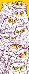 More owls by Curry-24