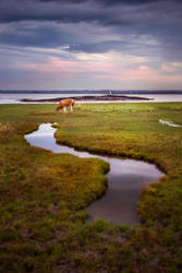Cow Pooing at Black Rock by Mark-Fisher-Photos