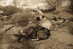 . la deuxieme meute de loups . by Amanda-Graham