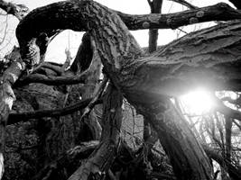 Fallen tree by miss-oddball