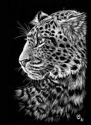 Scratch art: Chinese leopard by olvice