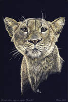 Scratch art: Lioness by olvice