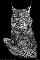 Scratch art: Lynx lynx by olvice