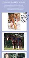 Animal Tutorial by ersayer5