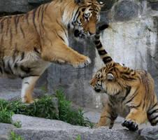Rowdy Tigers by Katzilla13