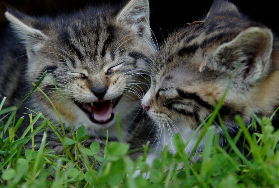 A Good Joke by Katzilla13