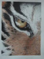 Tiger Eye by Sunny22345